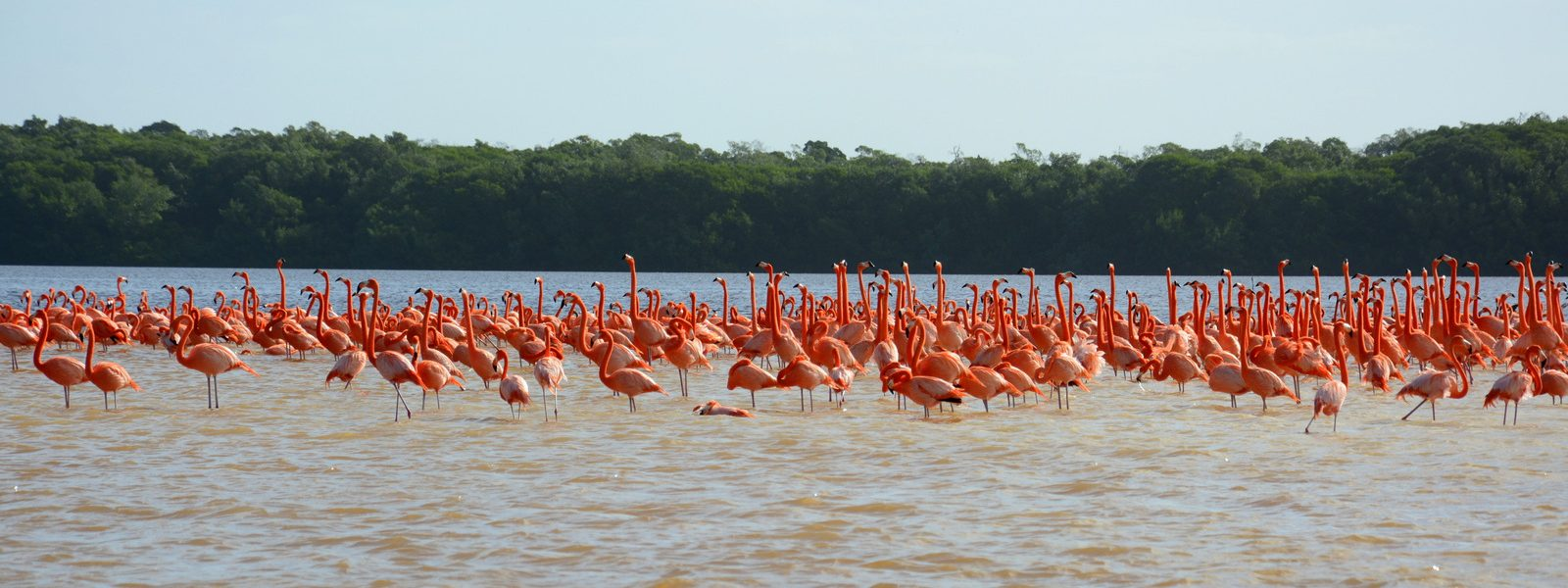 Where are flamingos?
