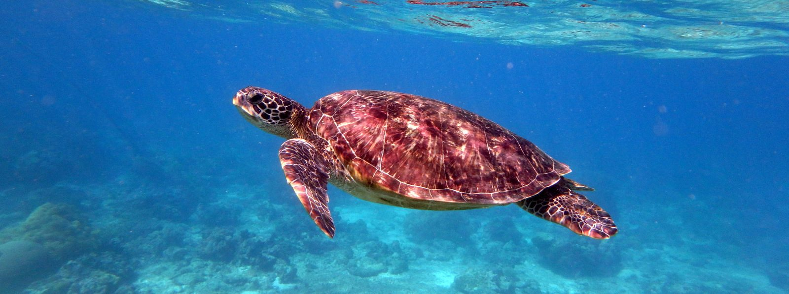 Underwater Philippines